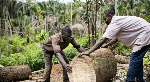 Charcoal burners cutting trees for burning charcoal near the village of Mbedoumou, Central Region, Cameroon.