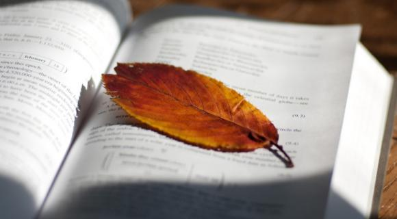Photo of a leaf on a book